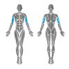 HUR Biceps Triceps Easy Access