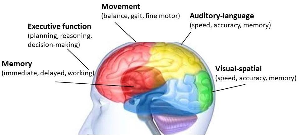 Cognitie in motie